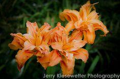 Orange Lily Flower Photo Fine Art #Floral by JKiesewetterPhotos - $20.00
