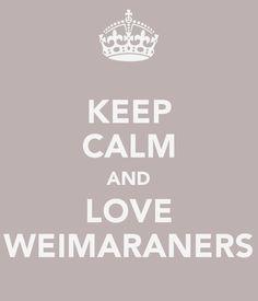 Keep Calm and Love Weimaraners - Weimaraner