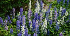 We've got a roundup of cottage-friendly (read: low-maintenance) plants that absolutely thrive in the shade—no matter how many trees you have blooming Perennials maintenance Perennials full sun ideas Shade Plants, Shade Garden, Amazing Gardens, Perennials, Plants, What Is Gardening, Plants That Love Shade, Natural Garden, Low Maintenance Garden