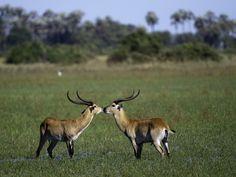 #botswana #wilderness