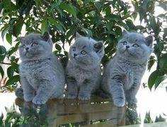 Gattiniiiii