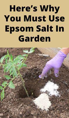 Vegetable Garden Design, Garden Soil, Garden Care, Lawn And Garden, Garden Insects, Garden Weeds, Garden Ideas To Make, Garden Yard Ideas, Diy Garden Projects
