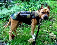 Winter Dog Coat Warm Dog Jacket Camouflage Dog by PepperPetWear Staffordshire Dog, Dog Winter Coat, Dog Ages, Dog Raincoat, Dog Jacket, Dog Wear, Dog Coats, Terrier Dogs, Dog Breeds
