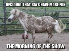 10 Memes That Show How Your Horse Feels About Spring « HORSE NATION