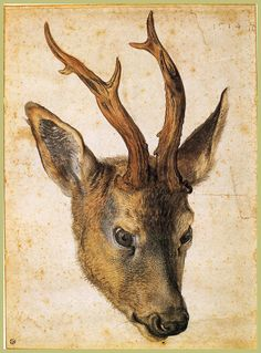 Albert Durer Famous Paintings | Head of a Stag - Albrecht Durer - WikiPaintings.org