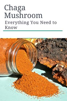How to Find, Harvest, and Process Chaga Mushroom Sustainably -- Everything you need to know in order to find, harvest, and process your own chaga mushroom without disturbing the ecosystem.