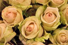 La Perla delicate pink rose at New Covent Garden Flower Market - October 2013