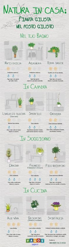 Find out which plant is best suited to your home environments.- Scopri quale pianta è più adatta ai tuoi ambienti di casa. Find out which plant is best suited to your home environments. Indoor Garden, Garden Plants, Indoor Plants, Garden Urns, Dream Garden, Home And Garden, Garden Design, House Design, Green Life