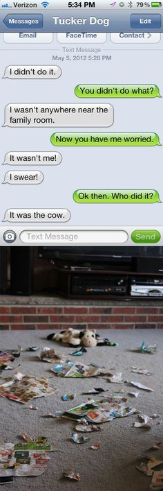 Text from Dog: I didn't do it. The cow did.  #textfromdog #dogs #funny Funny Text Fails, Funny Dog Texts, Funny Jokes, Text Memes, Hilarious, Text From Mittens, Cat Text, Funny Text Conversations, Humor Quotes