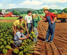 Arthur Sarnoff - Farmer Instructing 4H Class