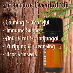 dōTERRA Arborvitae Essential Oil Thuja by CreationsFromTheNest