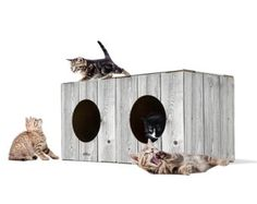 2 Pack Cardboard Kitty Condo, Best Kitty Condos, DIY Kitty Condo Plans, Cool Kitty Condos, Kitty Condo Designs, Kitty Condos For Large Cats