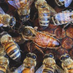 [ s8jp ] / [ 8 ] / #s8jp / #Beekeeping / #Apiculture / #養蜂