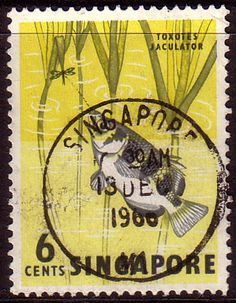 Singapore 1962 ArcherFish Fine Used                    SG 67 Scott 56 Other Asian and British Commonwealth Stamps HERE!