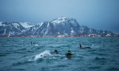 diving with orcas, swim with orcas, Norway orcas, swimming with killer whales, Eli Martinez