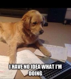 LOL dog funny puppy pun work homework science labrador lab report for-those-rainy-days Funny Dogs, Funny Animals, Cute Animals, Beagle Funny, Animal Jokes, Animals Dog, College Humor, School Humor, College Life