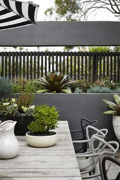 love the concrete planter wall & all the potted plantings of this modern monochrome outdoor space ~*~