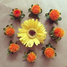"""SUNNY DAY"" #gerbera #daisy #carthamus #flores #flowers #flor #bloom #cool #startup #entrepreneur #FLOW #letitflow #flowerstagram #flowergram #green"