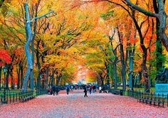 Top 10 Reasons to Fall in Love with Fall