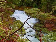 Title:  Gateway To Dreams - Mount Rainier National Park   Artist:  Photography Moments - Sandi   Medium:  Photograph - Print - Painting - Photography