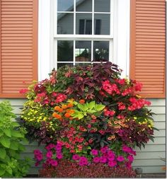 Next summer I want a window box like this. I plan to layer flowers in a window box outside my kitchen window. This overflowing window box is home to Coleus, geraniums, petunias, calibrachoa and fuchsia. Window Planter Boxes, Plants, Garden, Lawn And Garden, Garden Windows, Outdoor Gardens, Garden Oasis, Container Gardening, Garden Containers