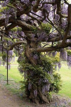 I want to climb this tree