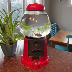 Turn an antique gumball machine into a fish tank.