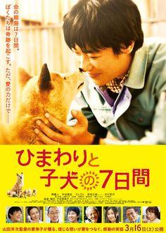 映画『ひまわりと子犬の7日間』 (C) 2013「ひまわりと子犬の7日間」製作委員会