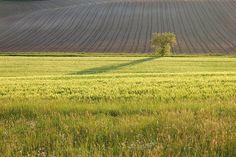 Meadow Tree Field Sun (Le Lauragais)