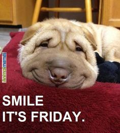 To my followers: Thank you for all of your great posts! Keep smiling! Happy Friday!