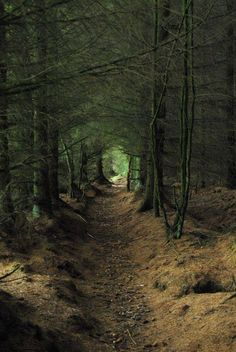 The Caledonian Forest, Scotland - inspiration for The Runaway Bride, a #medieval #Scottish romance by #ClaireDelacroix #Ravensmuir