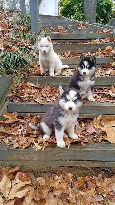 The gang. // KaufmannsPuppyTraining.com // Kaufmann's Puppy Training // dog training // dog love // puppy love