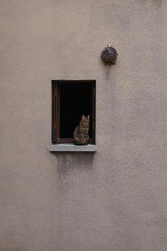 Cat. Window. by oscillateur, via Flickr