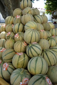 Melons of Cavaillon