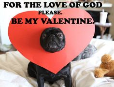 PLEASE? (pug,valentine,heart,cute,dog,love,funny,humour)