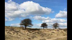 Lonely trees - Eenzame bomen