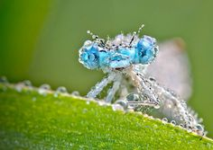 French photographer David Chambon, who specializes in wildlife photography, took these gorgeous macro photos of insects covered with morning dew, which we spotted over at Faith is Torment. Chambon's photos turn the bugs into glistening, crystalline confections, their vibrant colors shining through the water like glimmering gems. More than anything else, they make us want to go tromping out in the woods on an early spring morning.