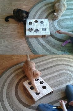 DIY cat whack-a-mole game. Take a box, cut holes in it, and cover it with shelf/contact paper. Take a pole or stick and tape a mouse toy horizontally to the stick. All you have to do is move it from hole to hole and they will go crazy