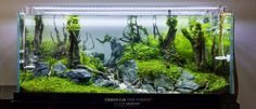 Aquascape-Idea-6.jpg 2 132×919 pixelů