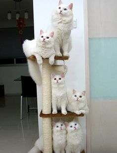 my kitty's family apparently. she has mismatched eyes just like the one on the middle row