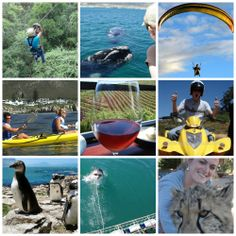 Percy Tours Hermanus  Phone: +27 72 062 8500 Email : travel@percytours.com Website: www.percytours.com Stuff To Do, Things To Do, Great White Shark, Whale Watching, Day Trips, Mountain Biking, Diving, Trail, Camping