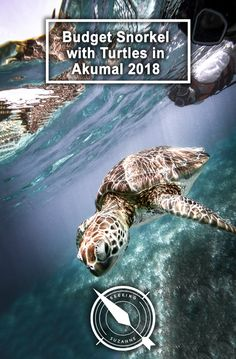 Here is how you can swim and snorkel with turtles for CHEAP and without a guide in the gorgeous Akumal, Mexico 2018 Akumal Mexico, Once In A Lifetime, Snorkeling, Travel Guides, Turtles, Adventure Travel, Travel Inspiration, Travel Destinations, Travel Photography