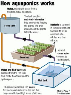 How Aquaponics works, in a nutshell. #SelfSufficiency #BackyardAquaponics
