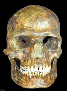 A genome taken from a 36,000-year-old skeleton (skull pictured) has shed new light on the ...
