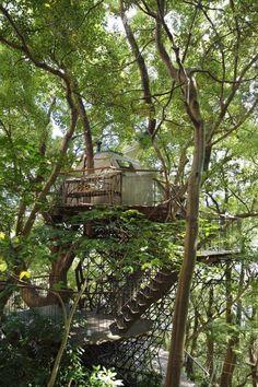 Questa sala da tè si trova su un albero a 10 metri dal suolo