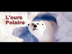 L'ours Polaire Documentaire Jeunesse - YouTube Polar Animals, Core French, Winter Theme, Read Aloud, Continents, Social Studies, Arctic, Videos, Classroom