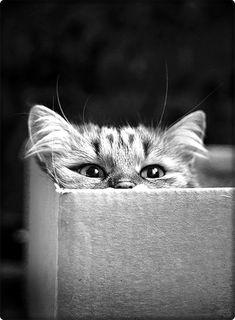 ébène mature chatte pic