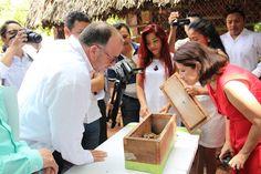 UIMQROO en busca del rescate a la abeja melipona; signan proyecto con Bepensa | La Voz del Pueblo, Z.M.