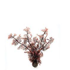 biOrb Crimson Sea Fan - Four Size Options