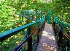Hey, Tarzan wannabee. Bij Buitencentrum Boomkroonpad in boswachterij Gieten-Borger in Drenthe is veel te beleven. Kies voor het Boomkroonpad. Dit wandelpad leid je hoog langs de toppen van dit Drentse bos.